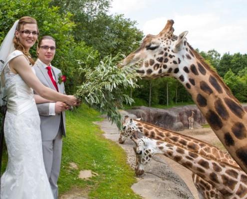 Giraf voeren Gaia Zoo Bruiloft Marc & Berit 2014
